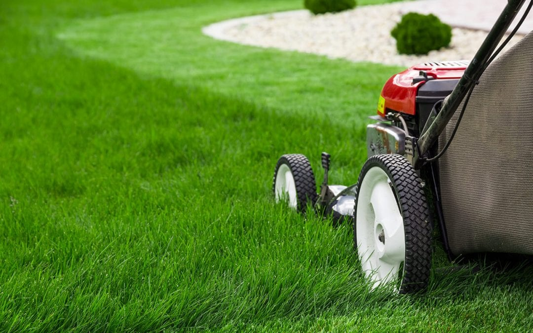 Maintain a Healthy Lawn All Summer